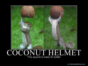 I don't have a picture of Pumpkin Cakes because they never last long enough to be photographed. So, instead, we have squirrels with coconut helmets. Nothing is better than squirrels with coconut helmets.