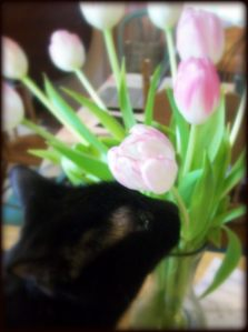 Isis taking a moment to smell the flowers.