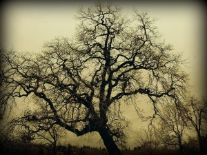 The Mighty Oak Tree
